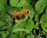JeffRenner-Butterfly.jpg